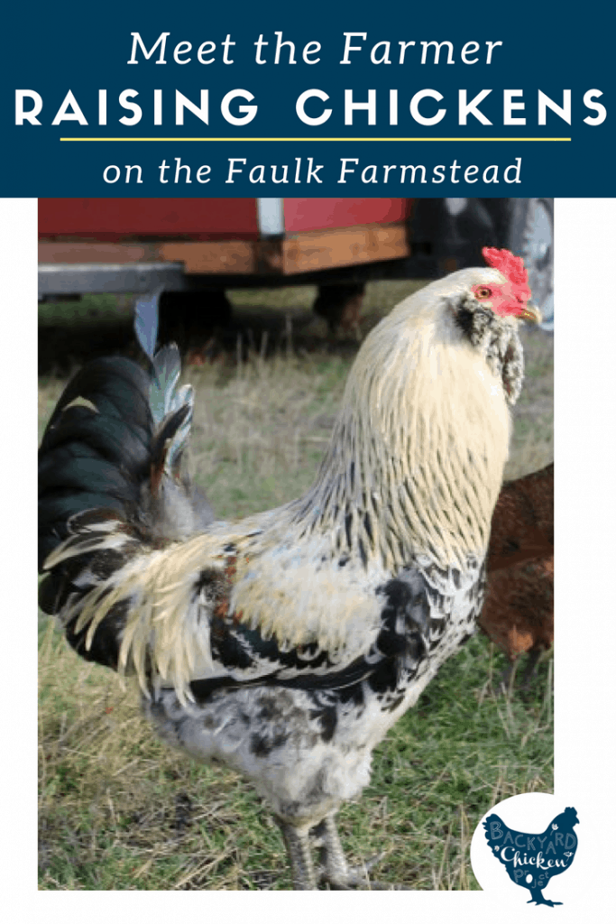 Find out how these rockstar homesteaders are raising chickens in their neck of the woods!