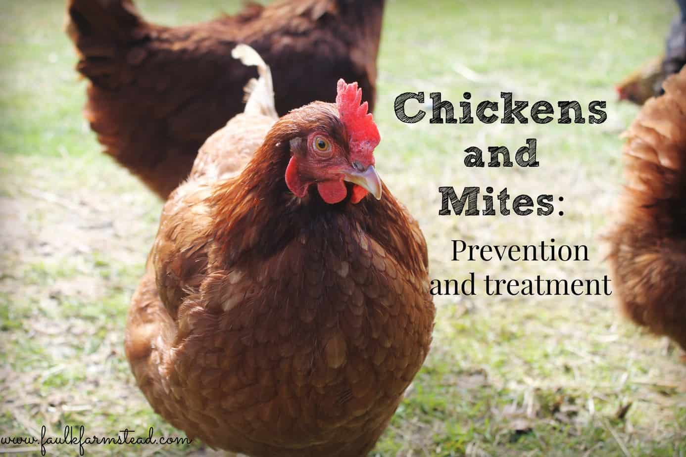 Chickens & Mites: Prevention and Treatment