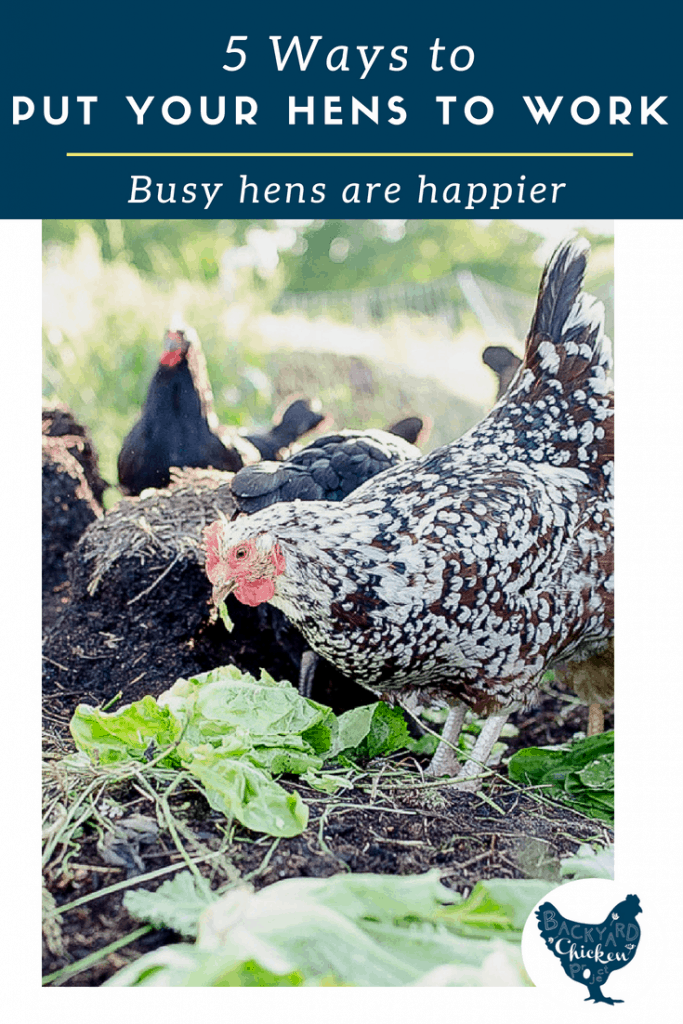 Are your hens a bunch of lazy freeloaders? It's time to get them to work! There are lots of jobs hens can do on the homestead!