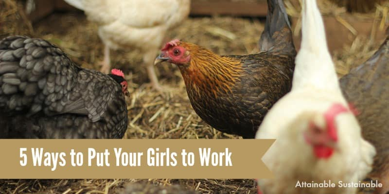 5 Ways Your Hens Can Help on the Homestead