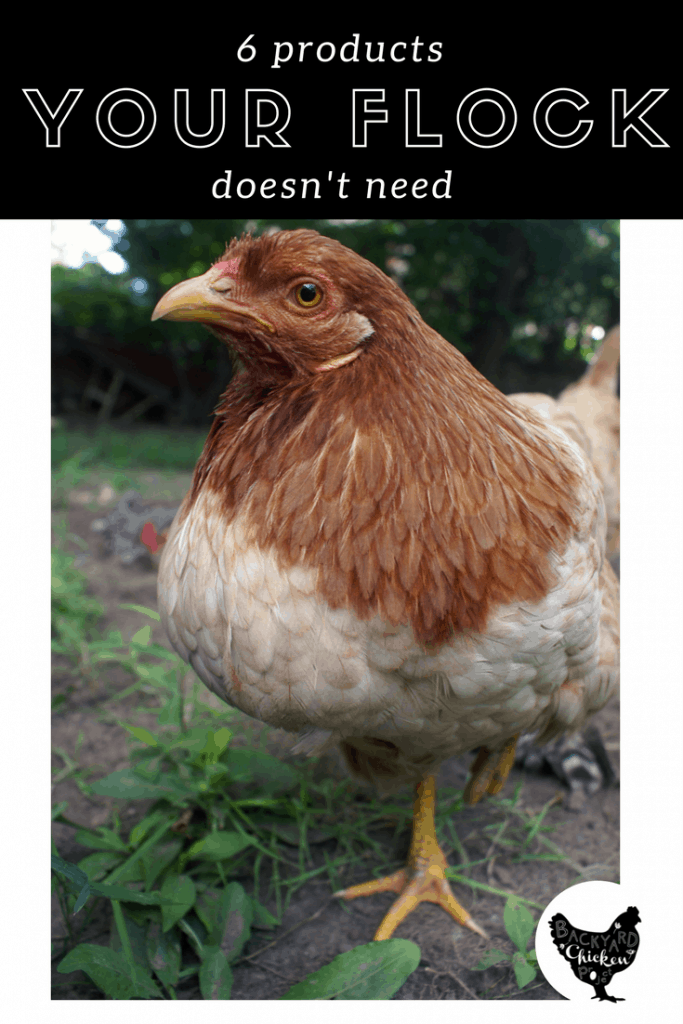 There are hundreds of products out there for chickens, but you can save money raising chickens by avoiding these 6 products you don't need!