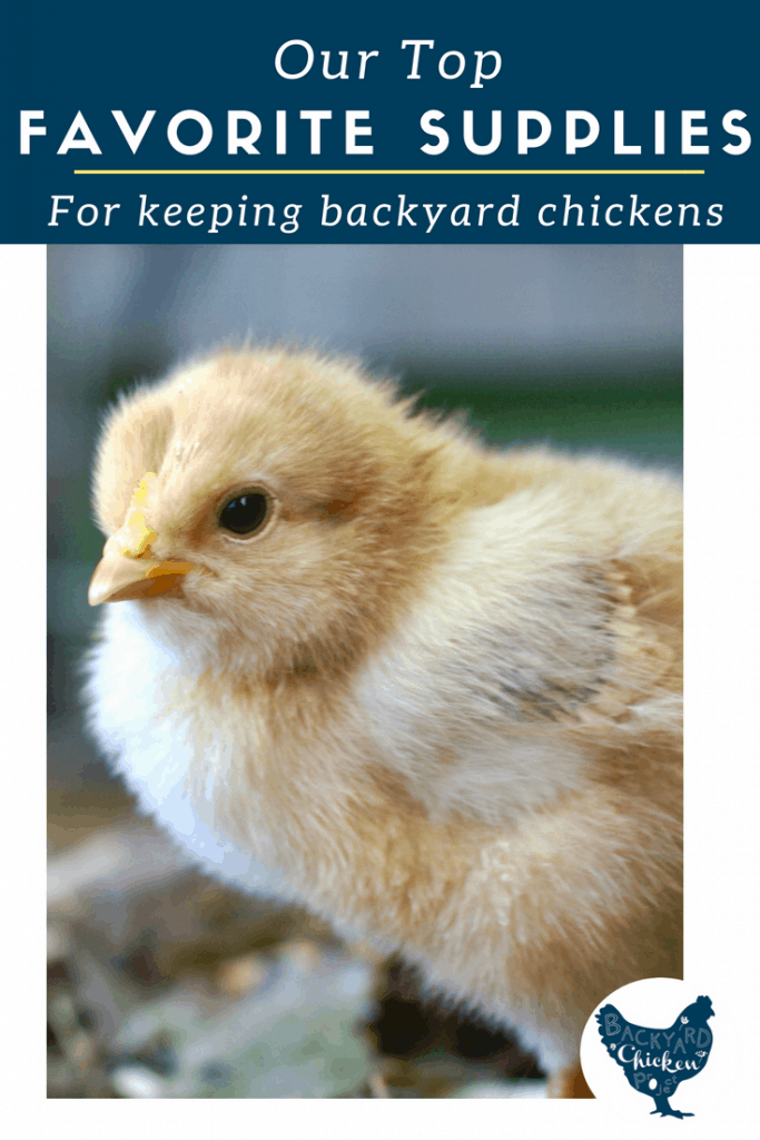 There are tons of chicken keeping supplies out there. These seven are the ones we truly couldn't live without!