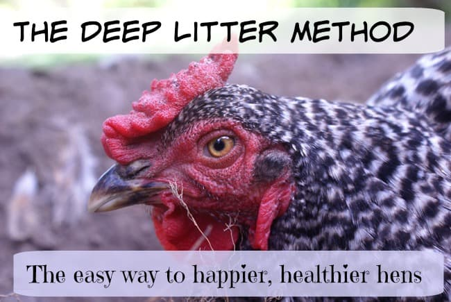 How to Use the Deep Litter Method for an Easy Care Coop