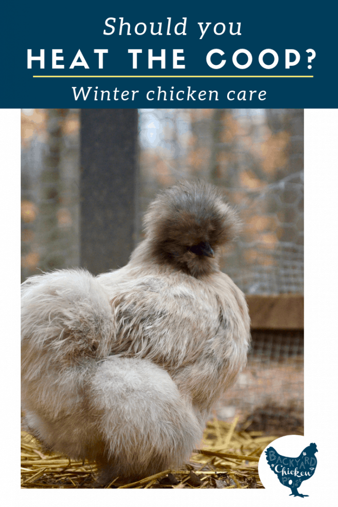 Should you heat the chicken coop this winter? Find out the pros and cons to adding heat to your coop.