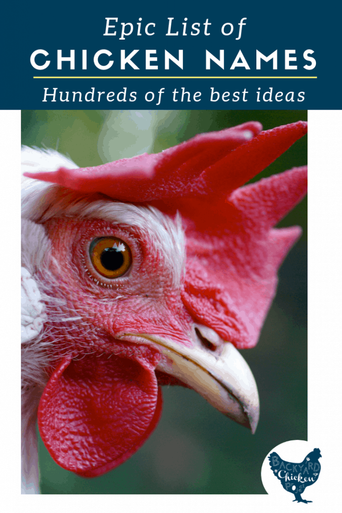 We've compiled an epic list of the most amazing chicken names on planet Earth!