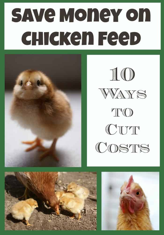 Raising chickens can get expensive, we've found 10 ways to drastically cut the costs of feed