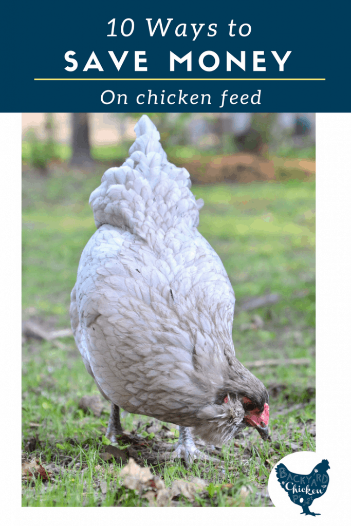 Raising chickens can get expensive, follow these ten tips to cut costs on feed