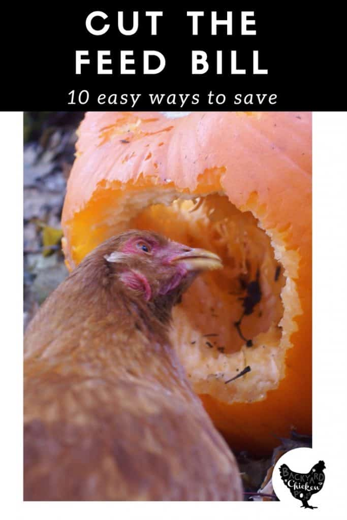 You probably got chickens so you could save money on eggs, right? Learn how to cut costs and save money on chicken feed with these ten tips!