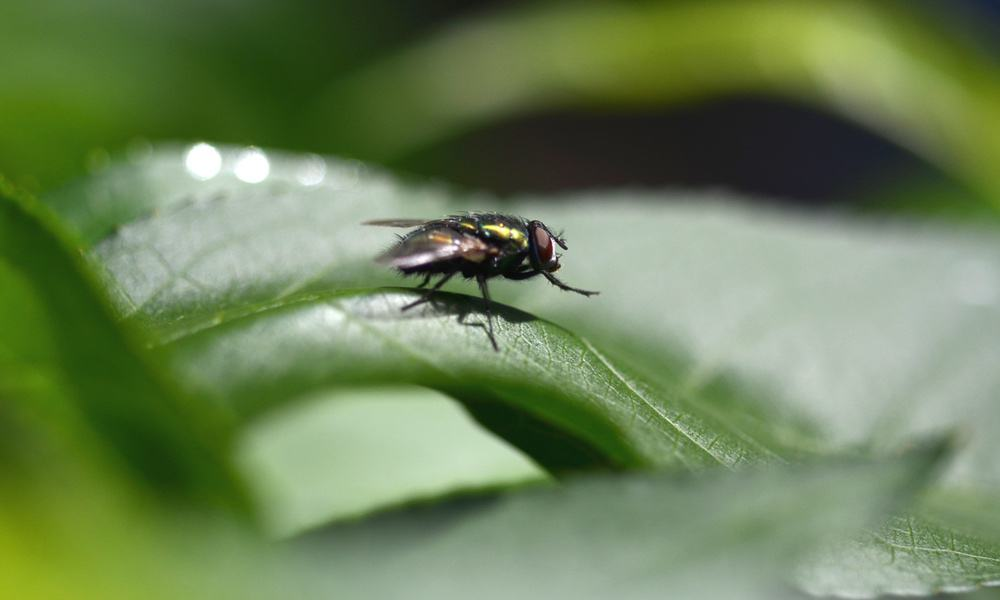 Get Rid of Flies: 8 Products That Really Work!