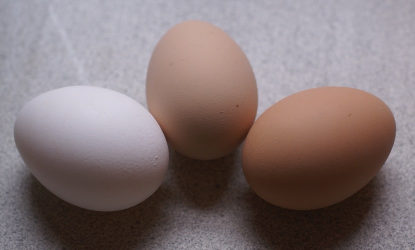 9 Reasons Why Your Chickens Stopped Laying Eggs