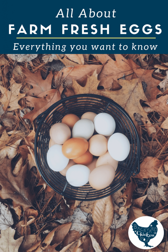 There's no doubt that farm fresh eggs are good for you, but boy can they be WEIRD! They come in different colors and sizes, what's up with that? All your questions are answered in this post.