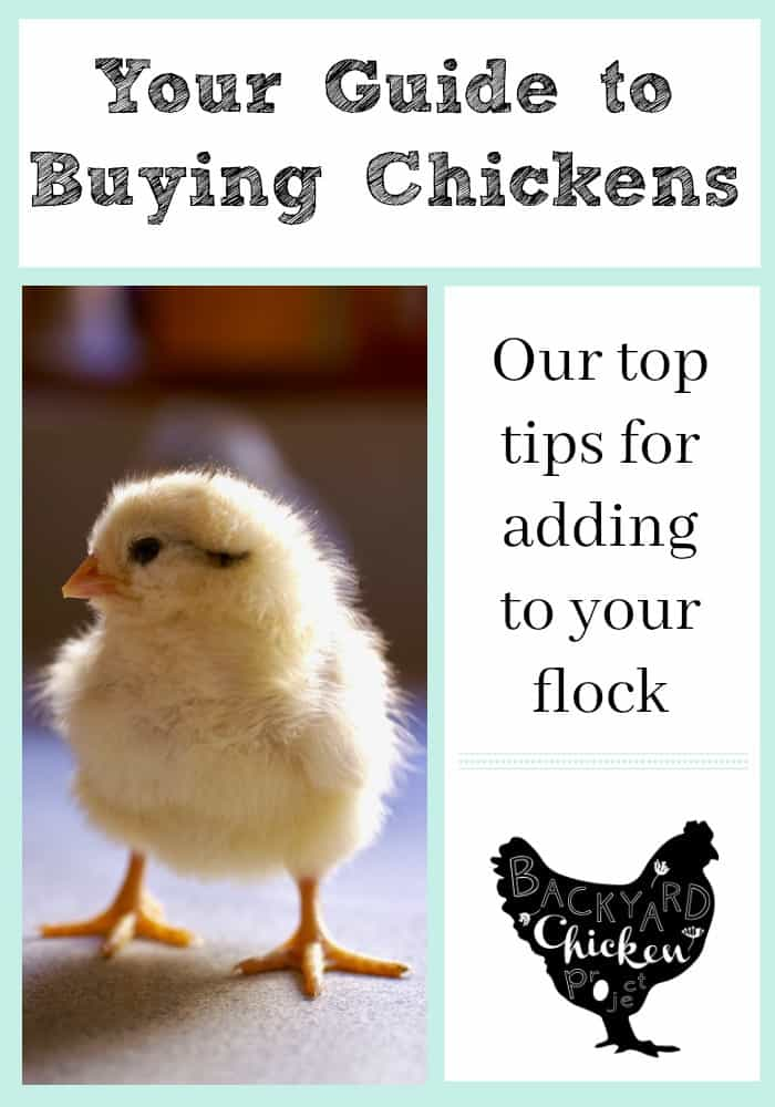 Our top tips for adding to your flock