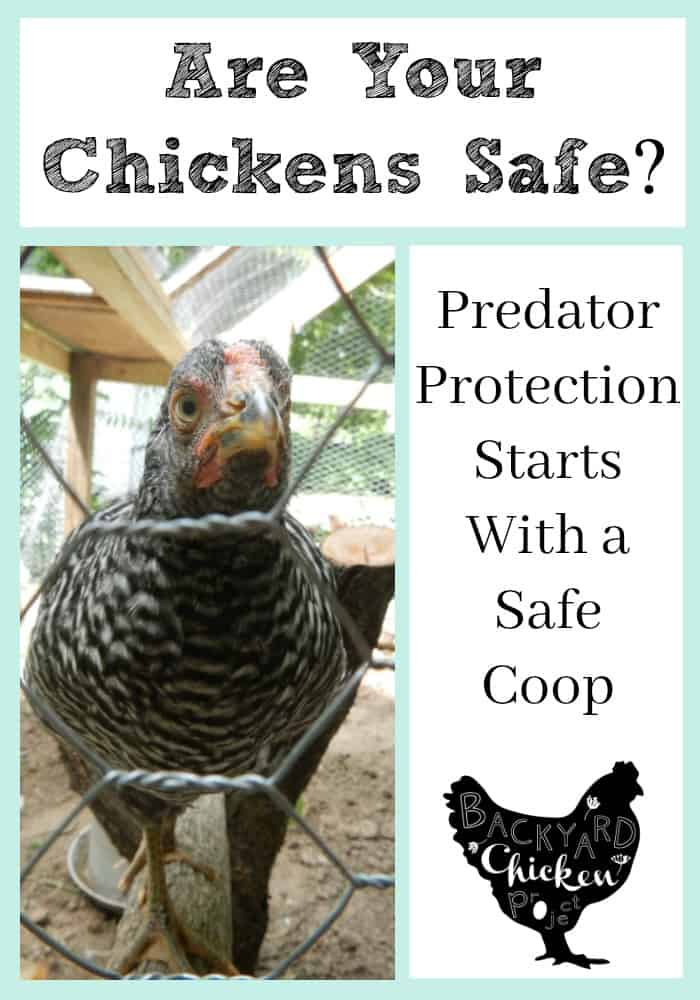 Protecting your flock of chickens from predators all starts with a sound coop. Here's how to build one.