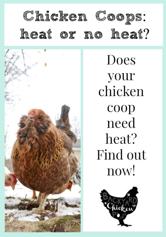 To heat of not to heat the chicken coop, that's the question.