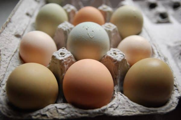 How to use Extra Eggs from your Backyard Chickens