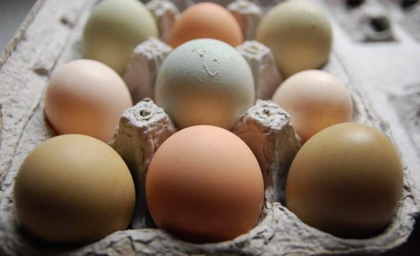 What do you do when your hens lay more eggs than you can eat? We have a dozen creative ideas to solve your problem!