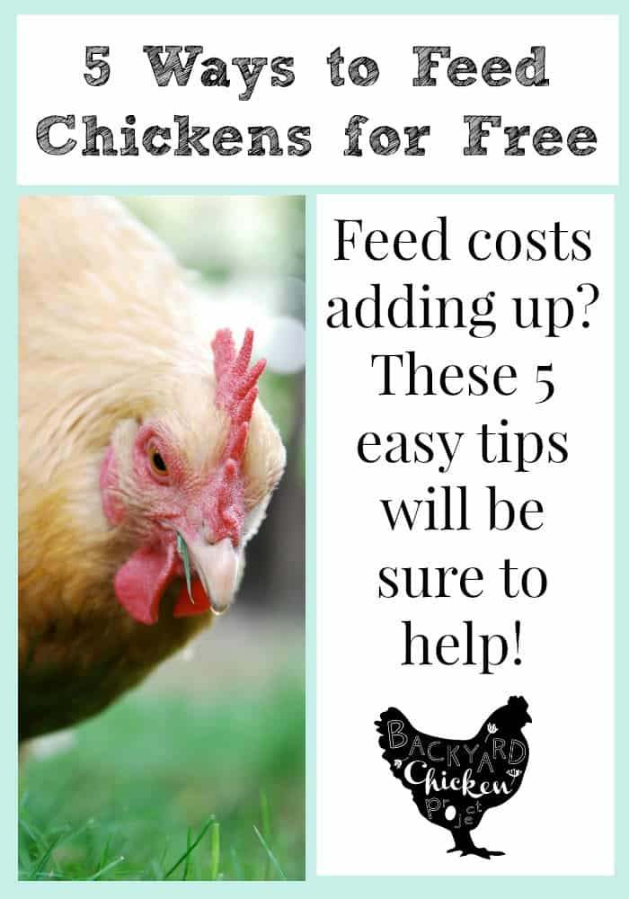 Feeding chickens isn't cheap, but we've found 5 ways to cut down on that feed bill!