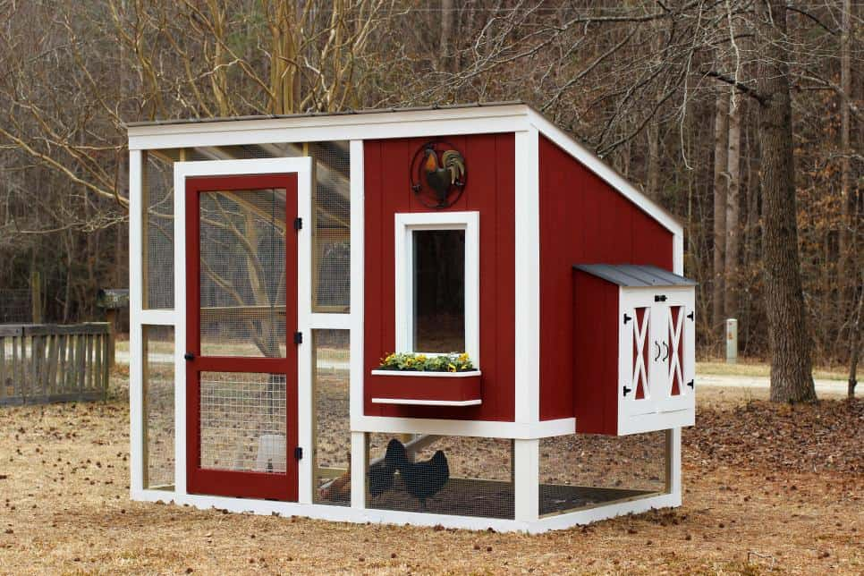 These free backyard chicken coop plans from HGTV are great!