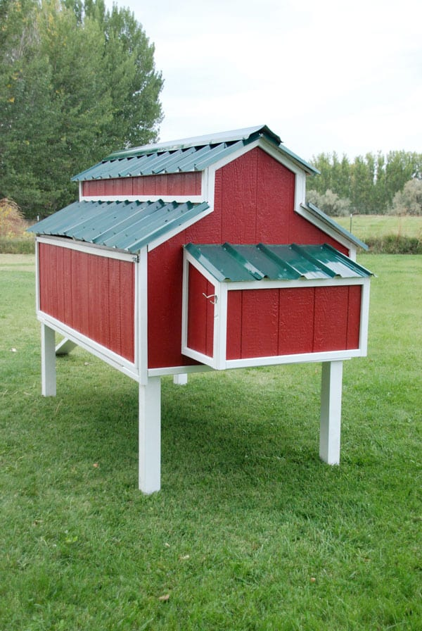These free chicken coop plans from the Home Depot are all that you need for a great coop!