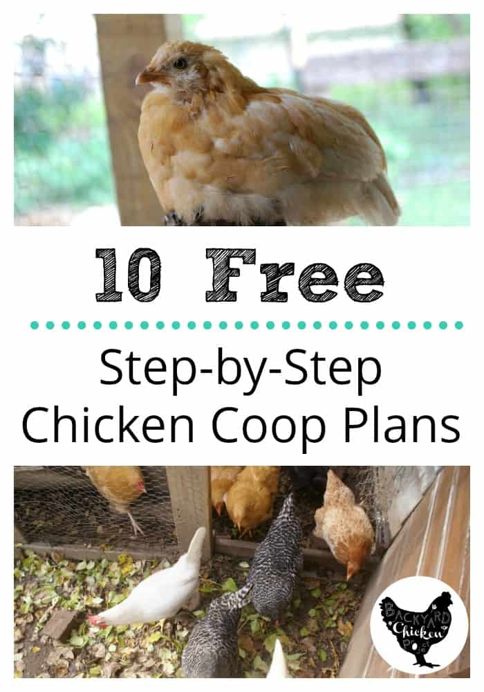 10 Free chicken coop plans that show you step-by-step how to build your chicken coop
