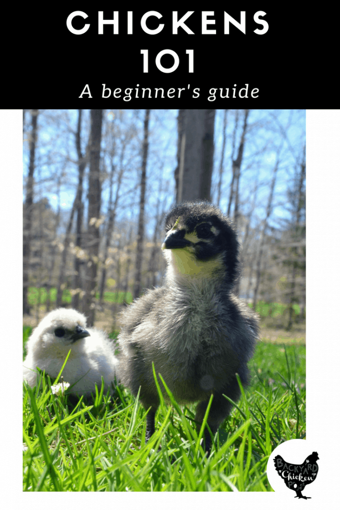 Taking on chickens can be overwhelming. Let us help you out with all the basics you'll need to get started!