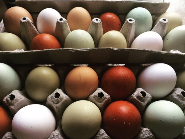 Colorful chicken eggs are laid by all different breeds.