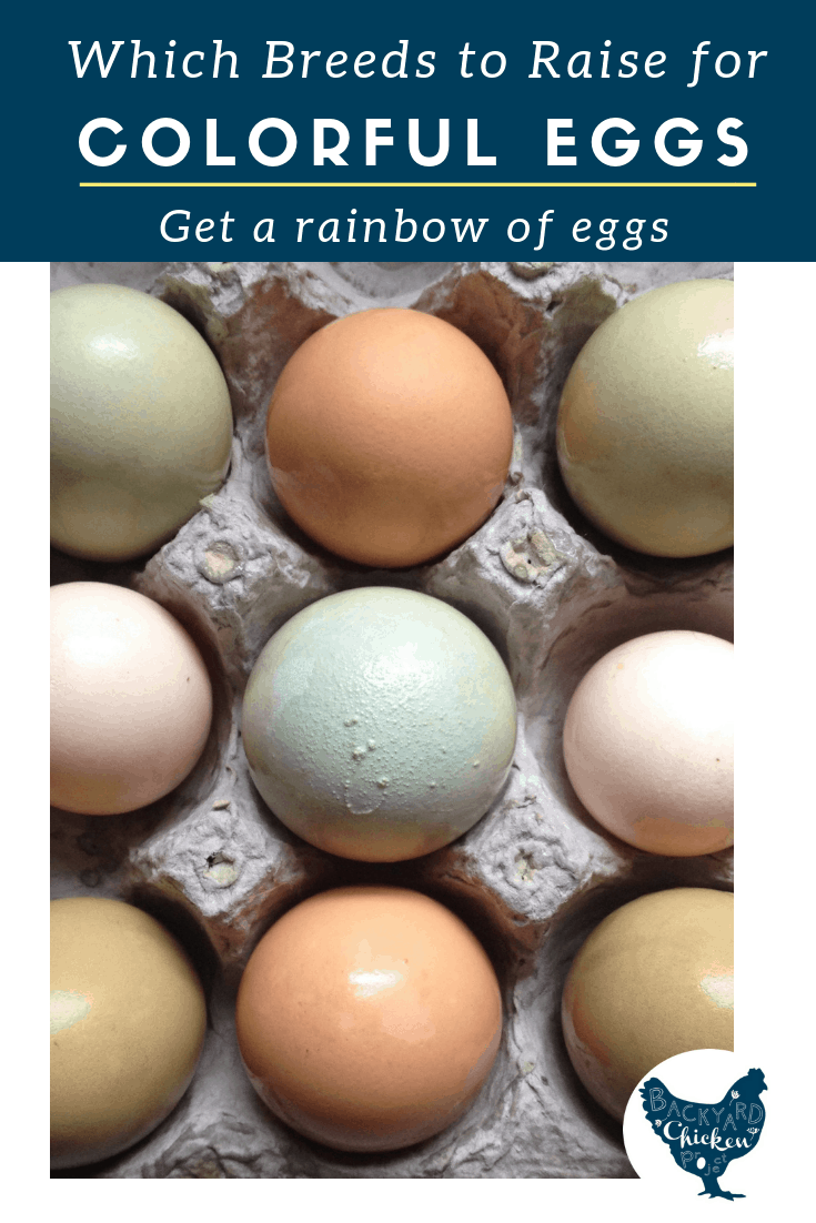 Chicken Egg Colors: Which Breeds Lay Which Colored Eggs?