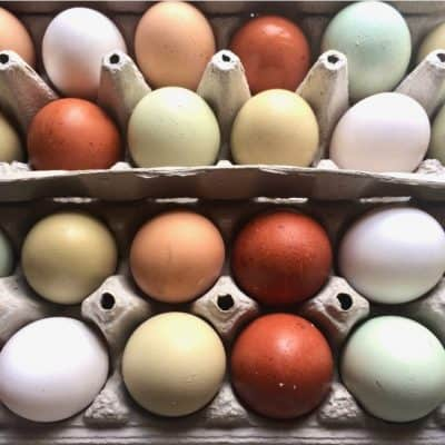Want to get a basketful of naturally colorful eggs? We'll show you which chicken breeds lay colorful eggs!