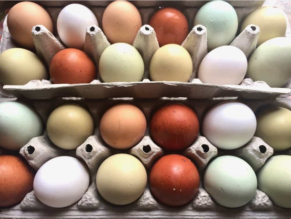 Chicken Egg Colors: Which Breeds Lay Colored Eggs?