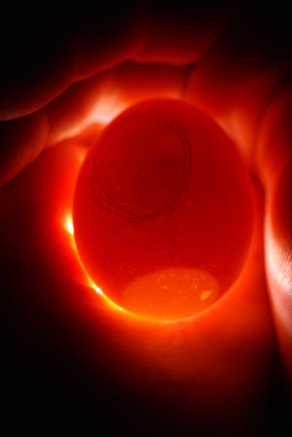 Candling eggs with a flashlight is the easy and inexpensive way!