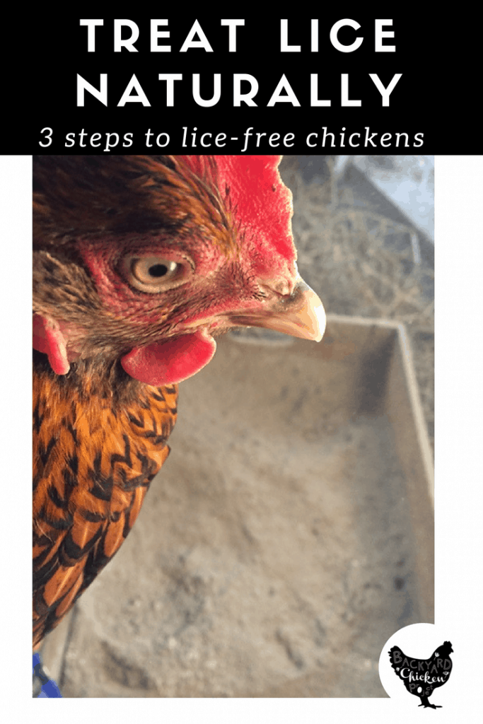 So, your chickens are riddled with lice? Before you reach for the pesticide, try out our natural chicken lice treatment!