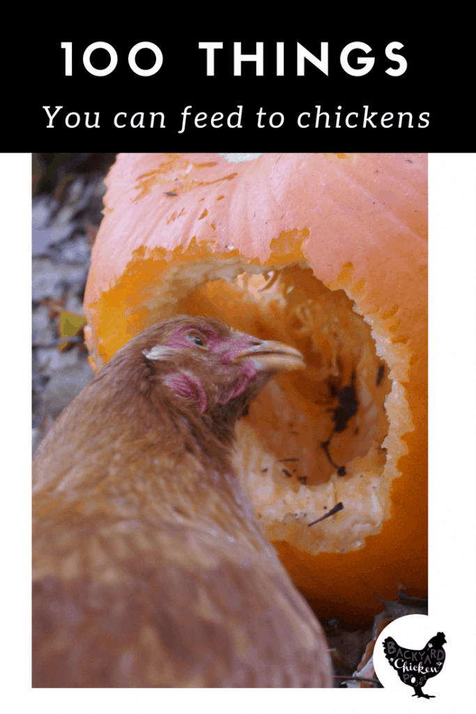 Want to treat your chickens? Here's 100 things you can feed to chickens to fill those happy beaks!