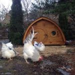 10 Drool Worthy Chicken Coops