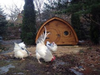 Need some chicken coop inspiration? We've gathered ten of the most incredible chicken coops on the market all in one place!