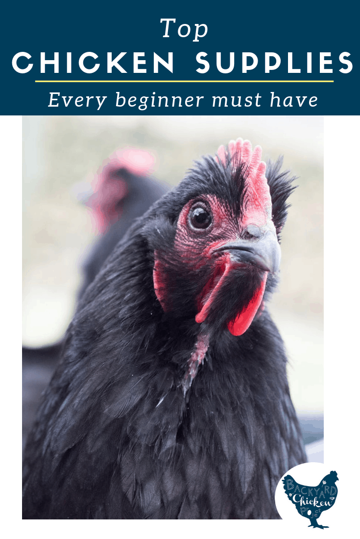 With so many chicken supplies on the market it can be hard to decipher what you truly need from what you absolutely don't. If you're thinking about getting chickens, this post is sure to help you figure out exactly what supplies you'll need.