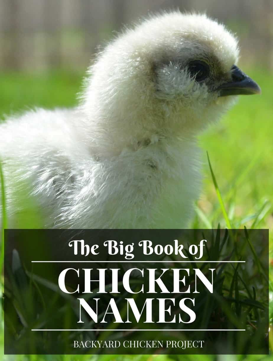 Need help naming your chickens? Our big book of chicken names has over 500 options for you!