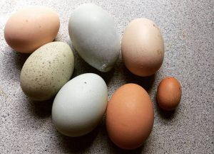 Understanding Egg Labels: Decoding the Grocery Store Egg Carton