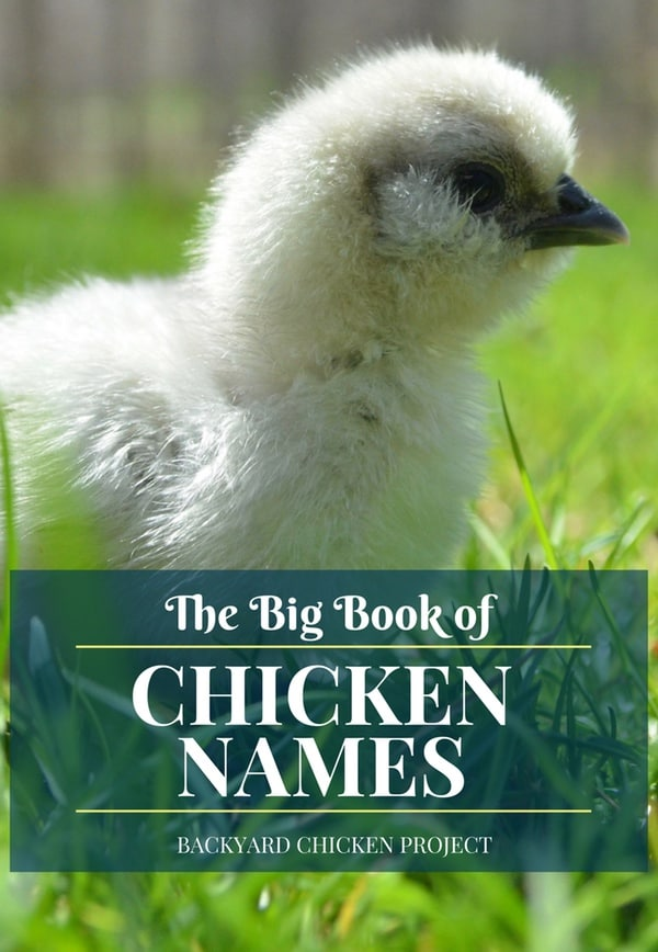 Naming chickens is hard, we've made it easy with our Big Book of Chicken Names! Choose from over 500 funny, sweet, and fabulous names!