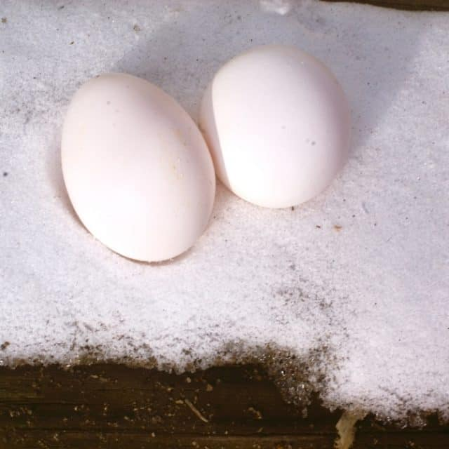 How to Winterize the Chicken Coop: 4 Steps for Success