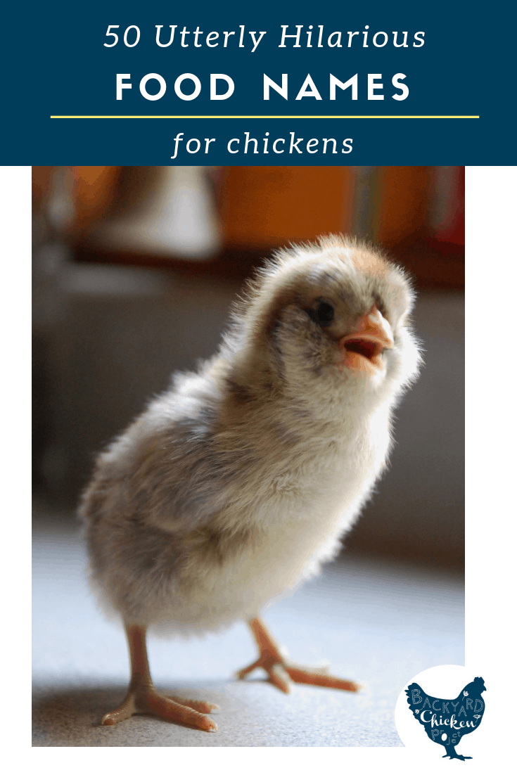 Are you struggling to find names for your new little ball of fluff? Struggle no more! We've found more than 50 hilarious food names for chickens that are sure to bring a smile to your face!