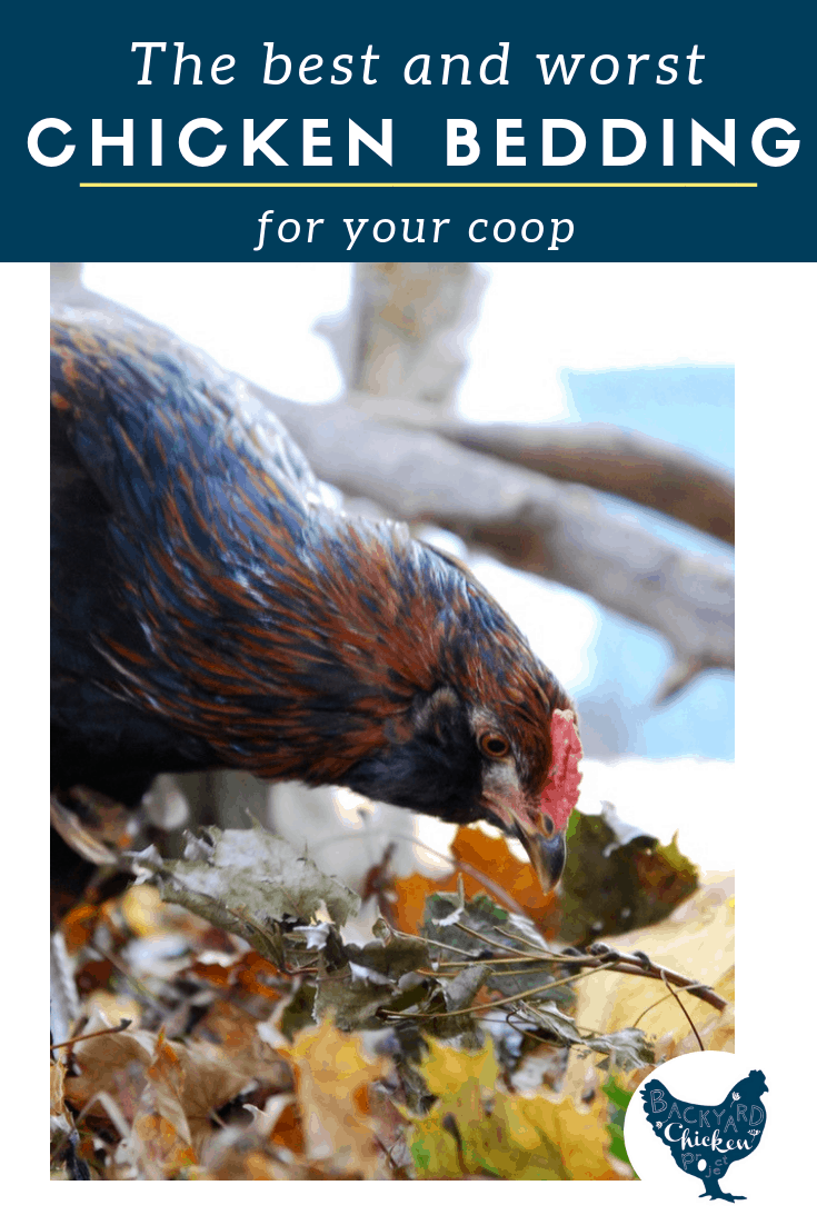 Which chicken bedding and litter is the best choice for your chicken coop? It can be a tough decision, get all the facts right here before you make a choice!