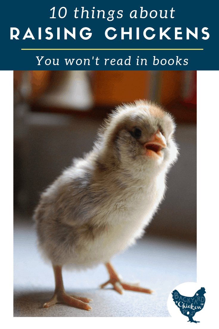 10 Bits of Chicken Information You Won't Read in Books- Want to know some of the best kept secrets on raising chickens? You won't find them in books, but you WILL find them here!