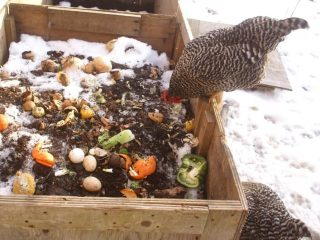Urban and suburban chickens are fun, but what do you do with all the poop?! Composting with chickens is totally the way to go to turn all that poo into glorious soil!
