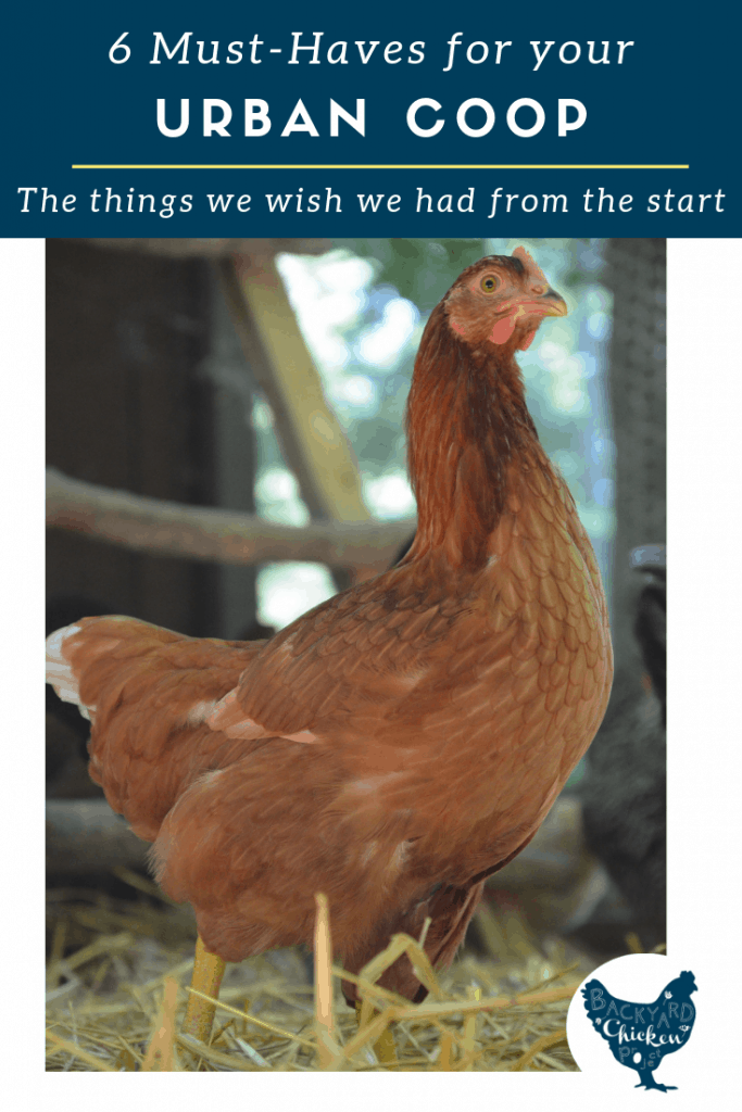 Raising chickens in the city is tons of fun but it certainly comes with challenges.  We believe these urban chicken coop supplies are must haves! #homesteading #homestead #backyardchickens #chickens #raisingchickens #poultry