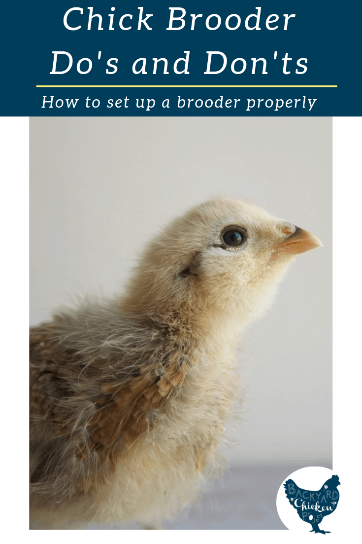 While there are many different ways to set up a chick brooder, there are definite guidelines to follow for the health and safety of your chicks.