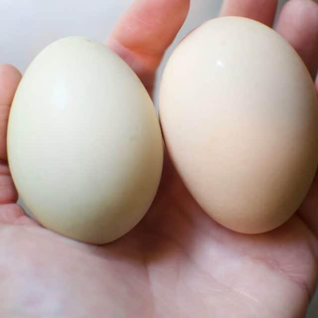 Help! My Hen Laid a Weird Egg!