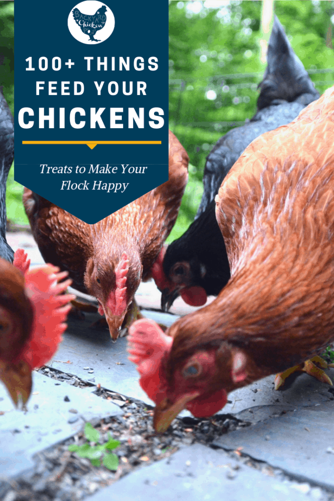 "We're often asked, ""What can chickens eat?"" The answer may surprise you! There are 100+ things chickens can eat to help you save on chicken feed. #homesteading #homestead #backyardchickens #chickens #raisingchickens #poultry"