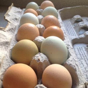 Should you add supplemental light in your winter chicken coop? Find out the pros and cons.