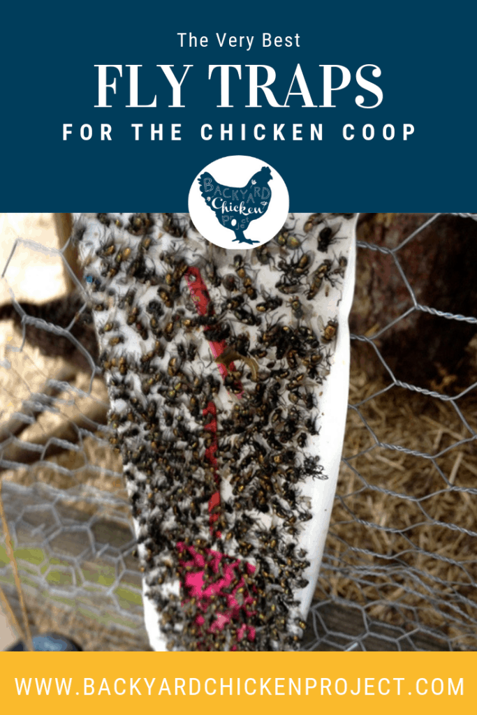 Raising chickens can bring its fair share of flies! We tried every fly control product out there to get rid of flies in the coop. These are the best fly traps! #chickens #backyardchickens #keepingchickens #raisingchickens #flies #flycontrol