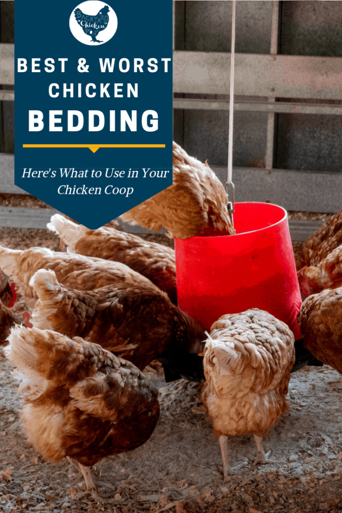 Which chicken bedding and litter is the best choice for your chicken coop? It can be a tough decision, get all the facts right here before you make a choice! #homesteading #homestead #backyardchickens #chickens #raisingchickens #poultry